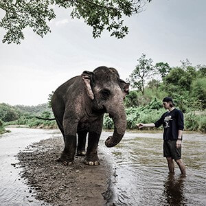 Photo of a man holding his hand out toward an elephant.