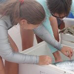 Students examining a fish