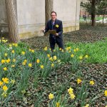 Photo shows Associate Dean Michael Thomas admiring the daffodils in bloom outside the English Department offices.