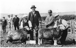 Beatrix Potter, children's book author, conservationist, and sheep-breeder, here with her award-winning Herdwick sheep, at that time a threatened native breed. Showing Potter with three men and two sheep in the foreground and a group of men in the background. The setting is outdoors in a rural area.