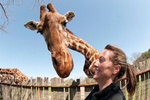 Giraffe Picture 1