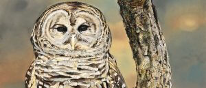 Rare Wildlife Revealed: The James Fiorentino Traveling Art Exhibition