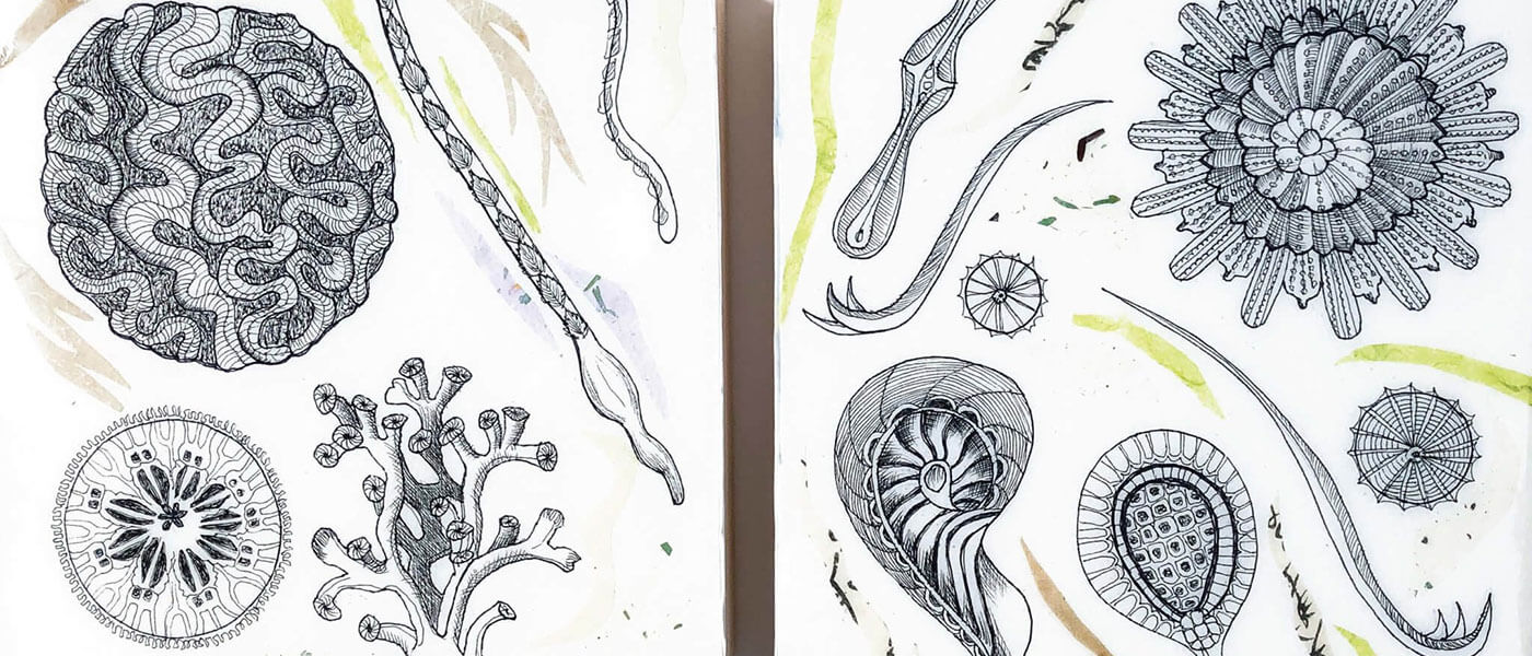 Graphic image for The Interface Between Marine Biology and Creative Microscopic Inhabitants of the Sea event