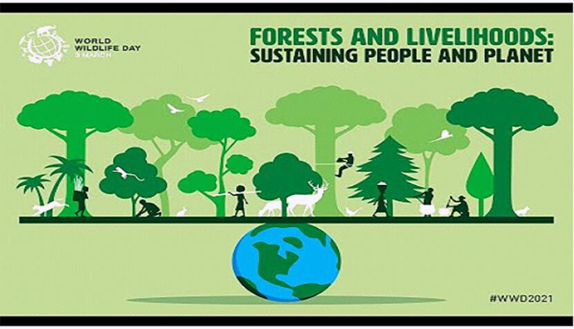Screenshot of Forest and Livelihoods Online Webinar