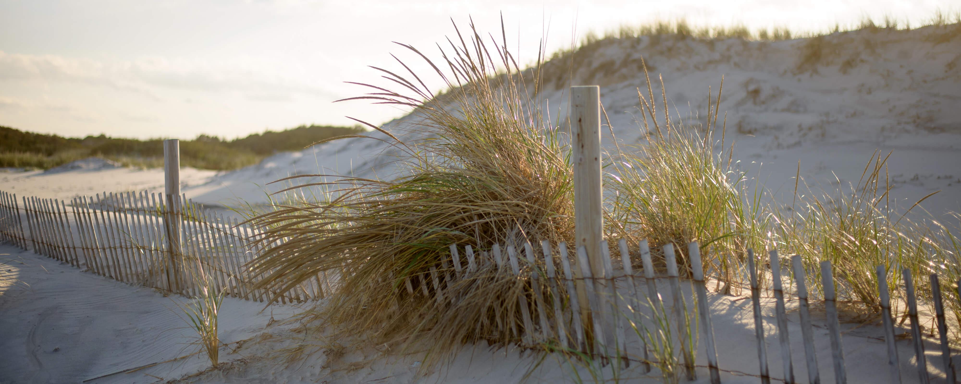 Dunes along the Jersey shore