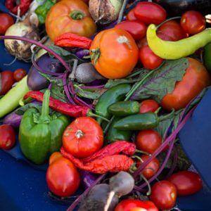 Community Gardeners To Convene at Monmouth University for Conference, August 7 to 9