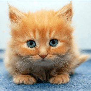 The Majority of Cats May Prefer Being With You, Says New Study from Monmouth Researcher