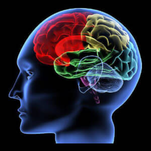 Prof. Janice Stapley Talks Concussion Safety for Female College Athletes