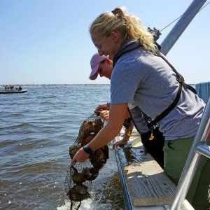 UCI and Monmouth Students Pitch in to Restore Barnegat Bay Oysters