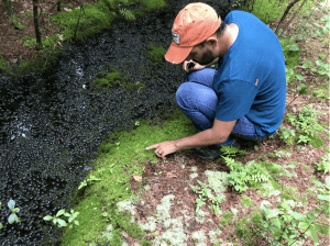 Professor Daneshgar's Research Looks at Abandoned Cranberry Bogs Across the Pine Barrens