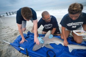 Prof. Dunton leads shark tagging research