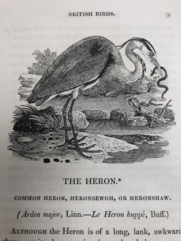 Photo of A wood engraving by Thomas Bewick. Bewick's illustrations helped inspire a revolution in 18th century natural history.