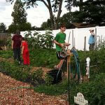 Community Garden - 3
