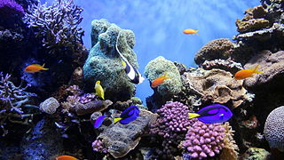 fish and corals
