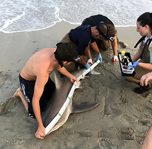 shark tag1