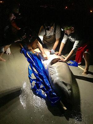 shark tag2