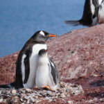 Click for larger image from Antarctica Photo 29